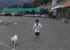 ヤギの散歩