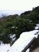 みかんと雪