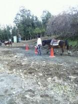 引き馬練習