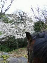 花見をするハチベエ