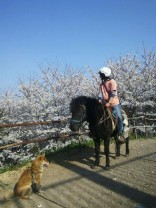 桜を眺めるみなみん