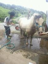 馬の洗ってサッパリ