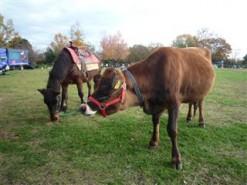 私は馬だもんっ