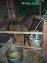 現在こんな馬体です!